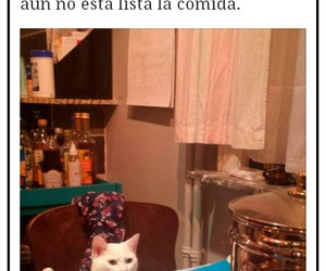 divertido, facebook, and funny image