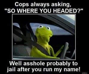kermit, frog, and funny image