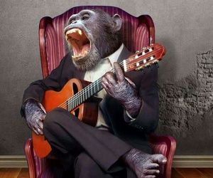 guitar, making music, and monkey image