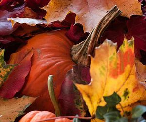 autumn, pumpkins, and leaves image