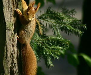 forest, squirrel, and tree image