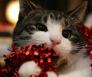 cat, christmas, and cute image