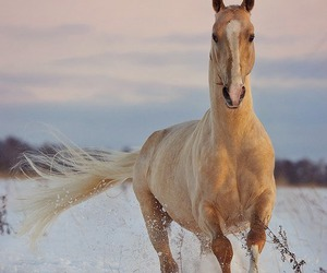 horse, animals, and beautiful image