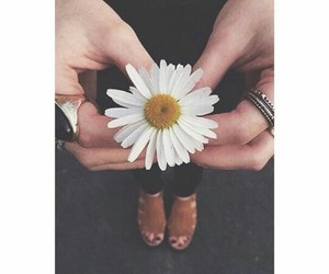 flowers, indie, and rings image