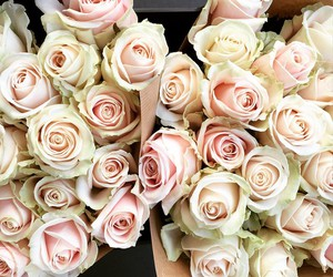fashion, flowers, and roses image