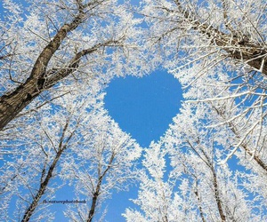 heart, winter, and tree image