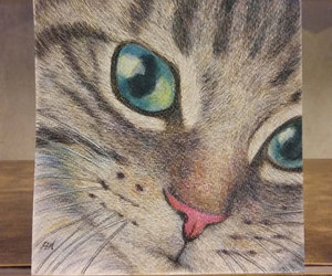 art, cat, and colored pencil image