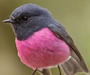 bird, pink, and animal image