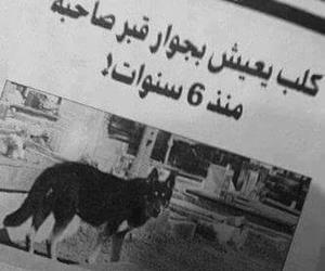 حيوان, كلبّ, and حبيب image