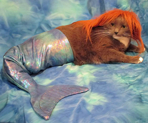 cat and mermaid image
