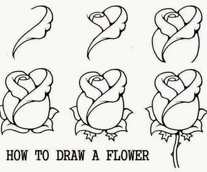 flower, draw, and rose image
