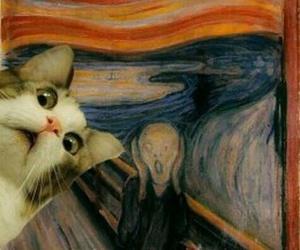 cat, funny, and scream image