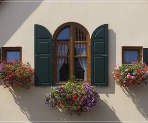 portas e janelas floridas image