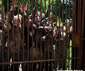 zombies, twd, and walkers image