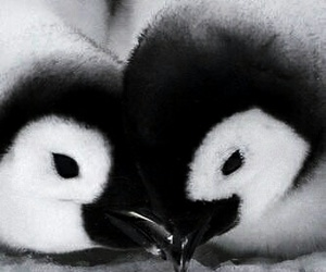 animal, penguins, and love image