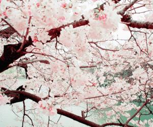 sakura, nature, and tree image