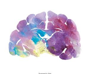 animals, art, and brain image