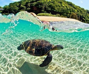 turtle, beach, and summer image