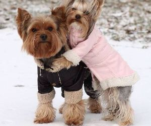 winter and cute image