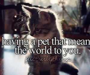 pet, cat, and justgirlythings image