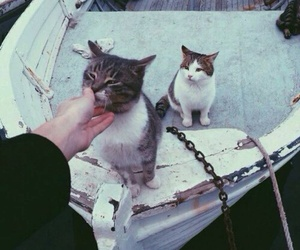 cat, emoji, and grunge image