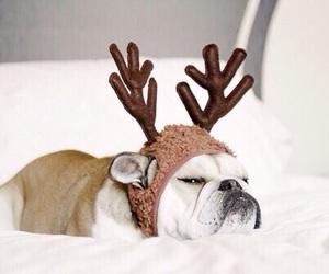 dog, cute, and christmas image