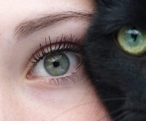 cat, eyes, and green image