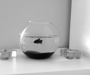fish, black, and grunge image