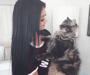 cat, animal, and hair image