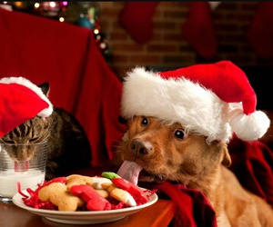 christmas, dog, and cat image