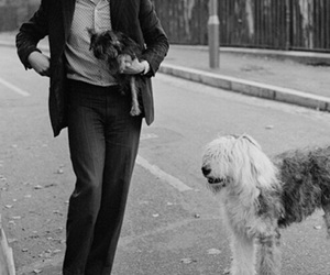 Paul McCartney, the beatles, and dog image