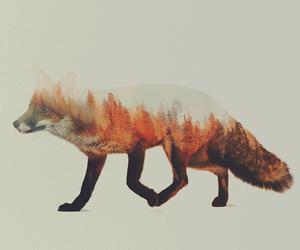 fox, animal, and art image