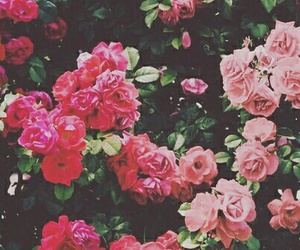 flowers, smile, and pink image