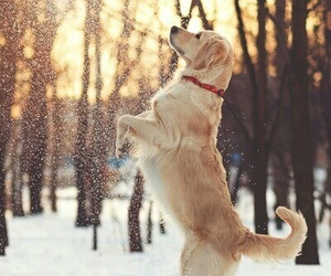 dog, winter, and animals image