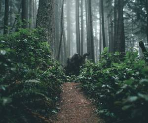 trees, way, and adventure image