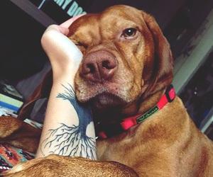 dog, cute, and beautiful image