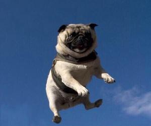 dog, pug, and sky image