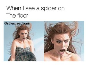spider, teen wolf, and holland roden image
