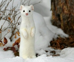 animal, snow, and white image