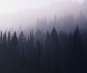 forest and hipster image