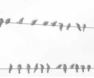 bird, background, and free image