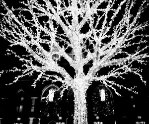 black and white, christmas, and hipster image