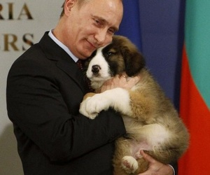 dog, russian, and president image