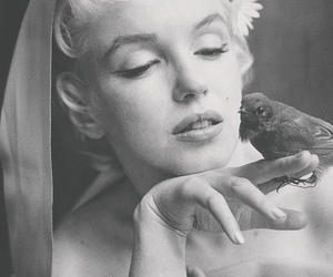 Marilyn Monroe, bird, and beautiful image