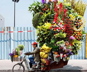 flowers and shanghai image