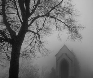 dark, fog, and tree image