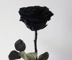 black and white, grunge, and rose image
