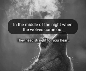 wolf and one direction image
