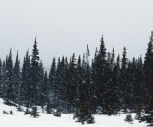 header, twitter, and winter image
