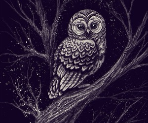 owl, animal, and night image